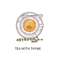 tea with thyme in glass cup - top view drawing vector image
