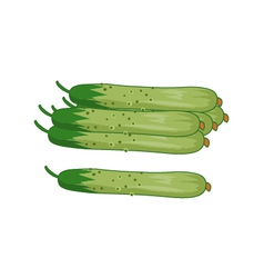 Wax gourd vector image