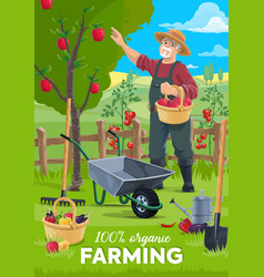 organic farming farmer gathering apple fruits vector image