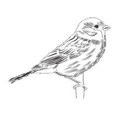 Hand drawn outline bird isolated on white vector