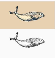 Harbor seal marine creatures nautical animal vector