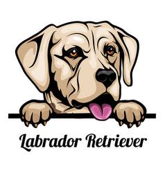 labrador retriever - color peeking dogs - breed vector image
