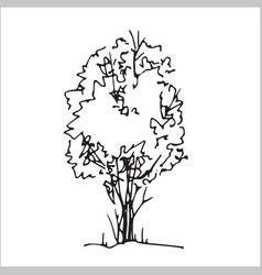 Shrub hand drawn sketch freehand drawing vector