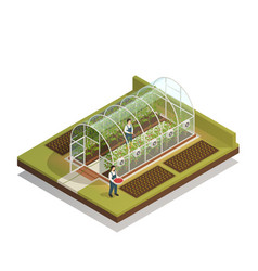 Tunnel shaped greenhouse isometric composition vector