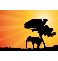 African sunshine vector image vector image
