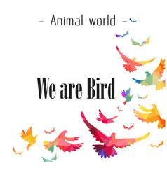 animal world we are bird colorful bird background vector image