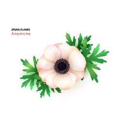 isolated realistic blooming vector image