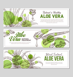 Aloe vera vertical banners with sketch flowers vector