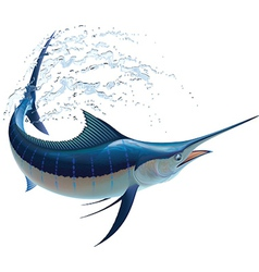 Blue Marlin vector image