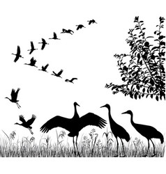flock of cranes vector image