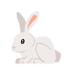 Home animal pet - rabbit vector