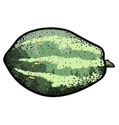isolated vintage papaya vector image