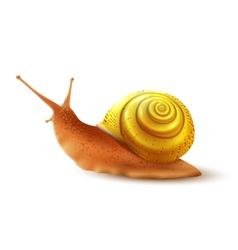 Snail realistic isolated vector image