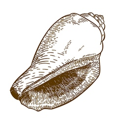 Engraving cone shell vector