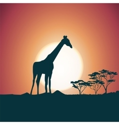 Orange evening savanna scenery with giraffe vector