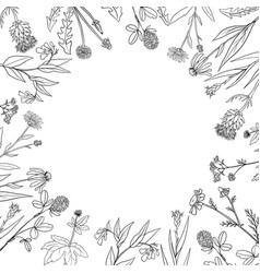 round frame with medical plants vector image