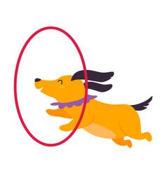 Circus dog animal jumping through hanging hula vector