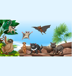 Wild animals on the mountain vector