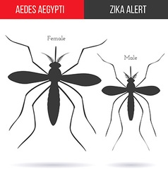 Zika virus graphic design elements vector image
