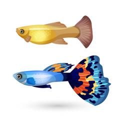 Fish Poecilia reticulata and carp isolated on vector image