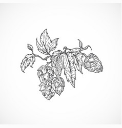 beer hops branch abstract sketch hand drawn vector image