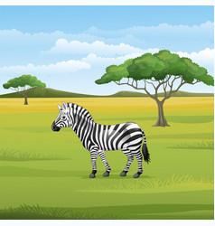 Cartoon zebra standing in savannah vector