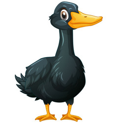 Duck with black feather vector