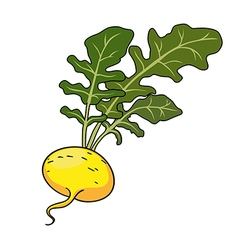 Yellow turnip with leaves vector