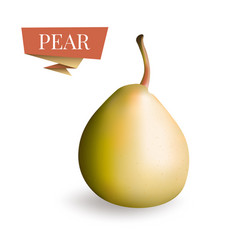 Isolated picture of pear fruit 3d pear vector