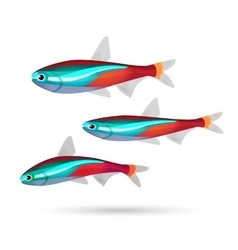 Tropical aquarium fish on white background Neon vector image vector image