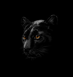 head of a black panther vector image