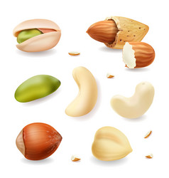 nuts realistic set isolated vector image