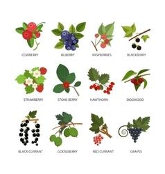 Set of berries Design elements in flat vector