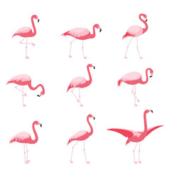 Set of isolated pink flamingoes tropical flamingo vector