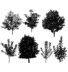 summer trees silhouettes vector image