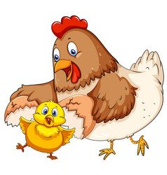 mother hen and little chick vector image