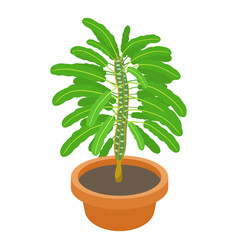 euphorbia plant icon cartoon style vector image