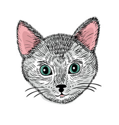 hand drawn face of young cat vector image