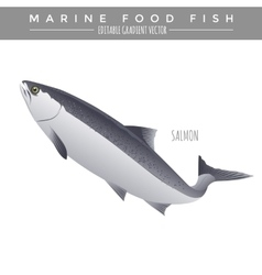 Salmon marine food fish vector