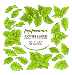 Peppermint elements set vector