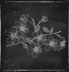 cherry chalk vector image