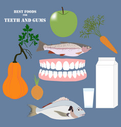 Best foods for teeth and gums vector