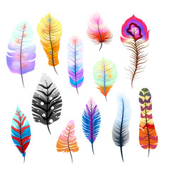 big set of different colorful feathers on white vector image