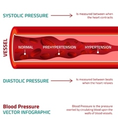 Blood Pressure Infographic vector image