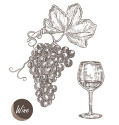 bunch of grapes and wineglass in vector image