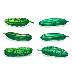 cucumbers table color sketch vector image