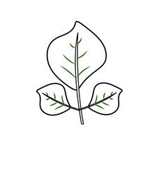 line natural leaves botany of tropical plant vector image
