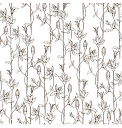 seamless pattern of wild herbal flowers vector image