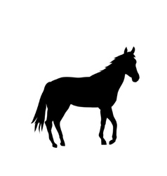 Silhouette Cartoon horse vector