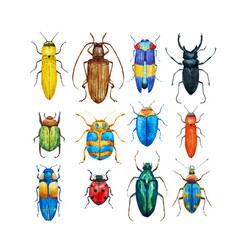 Watercolor beetles set vector